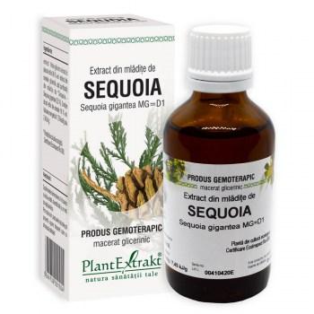 extract gemoterapic din mladite de sequoia plantextrakt earome