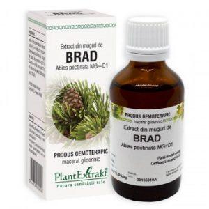 extract din muguri de brad plantextrakt earome