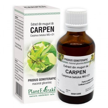 extract din muguri de carpen plantextrakt earome